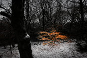 Pollok Park, Glasgow..26.12.10..Picture Copyright:.Iain McLean,.79 Earlspark Avenue,.Glasgow.G43 2HE.07901 604 365.pictures@i...