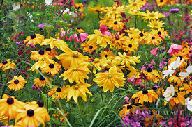 Flower garden with coneflowers - Europe, Germany, Bavaria, Upper Bavaria, Munich - digital
