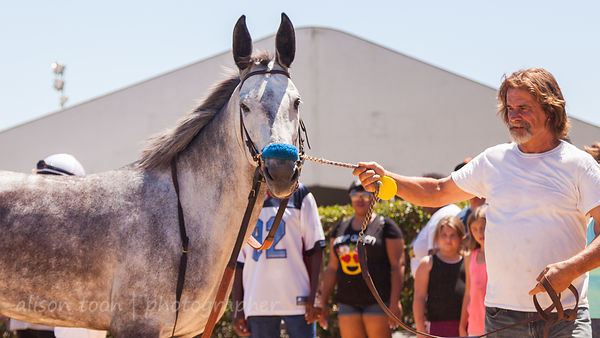 Senorita, winner of the mule race at Sacramento