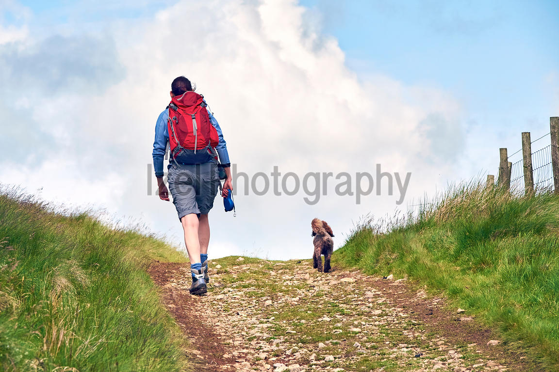 Walking a dog in the English countryside.