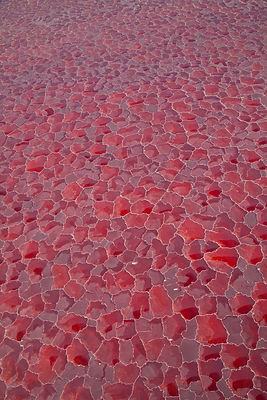 Aerial view of salt pans coloured red by cyanobacteria, Lake Natron, Rift Valley, Tanzania, August 2009