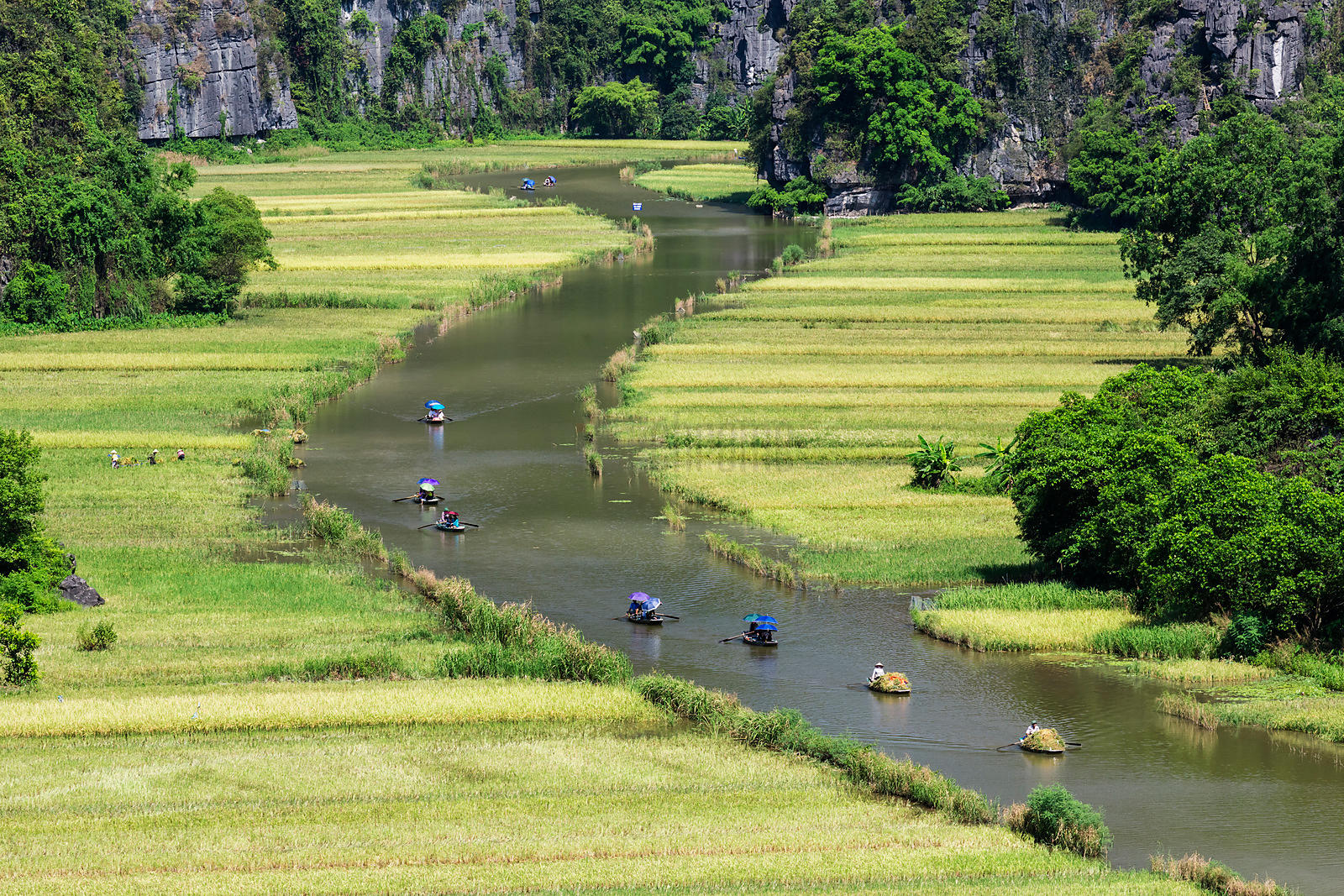 Elevated View of Boats Carrying Rice Harvest and Tourists