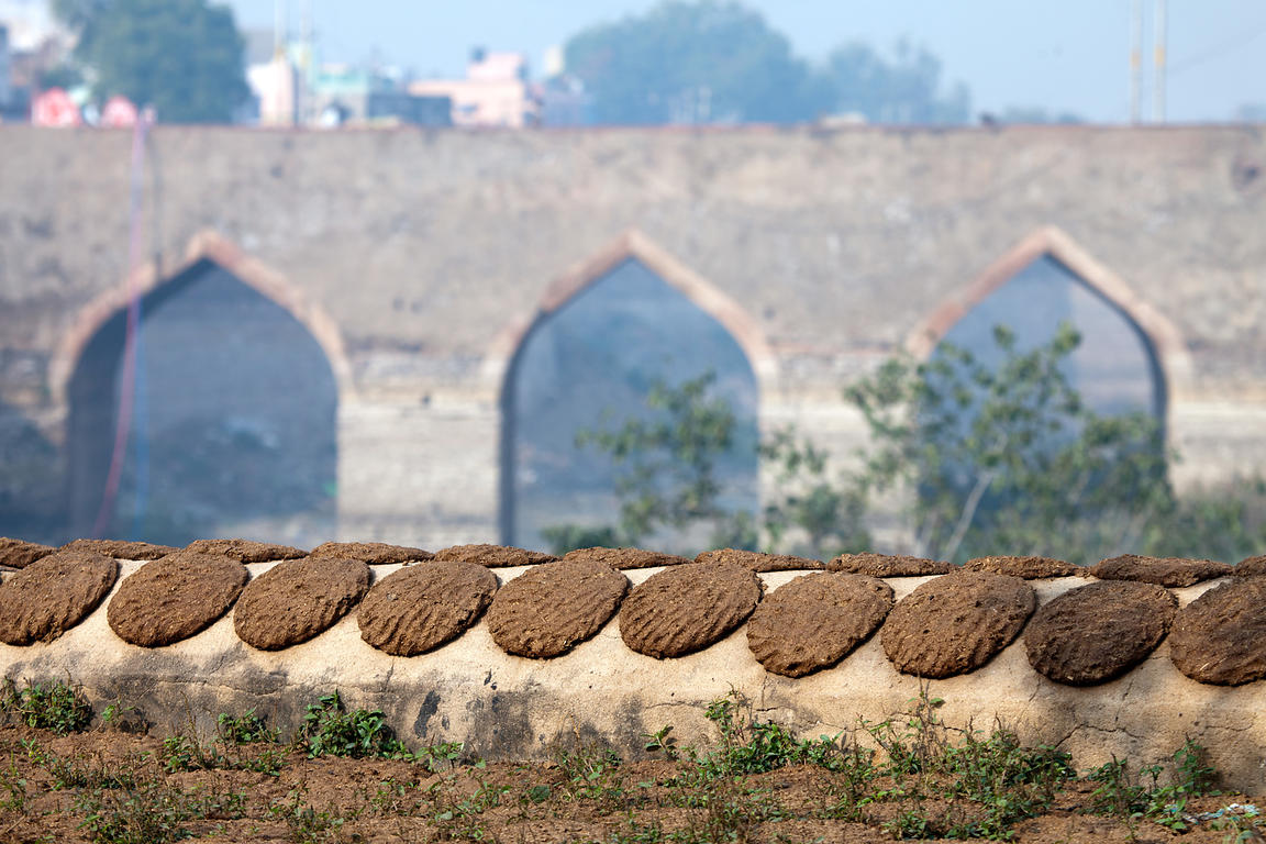 Cow dung patties drying on the wall of Lohagarh Fort, Bharatpur, Rajasthan, India