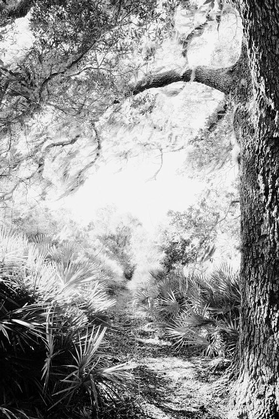TABLE POINT TRAIL CUMBERLAND ISLAND GEORGIA BLACK AND WHITE