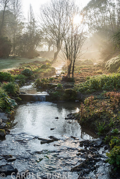 Early morning sun illuminates the stream that links a sequence of large ponds, edged with moisture loving plants including as...