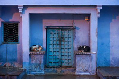 Dogs sleeping outside of a blue house in Bundi, Rajasthan, India