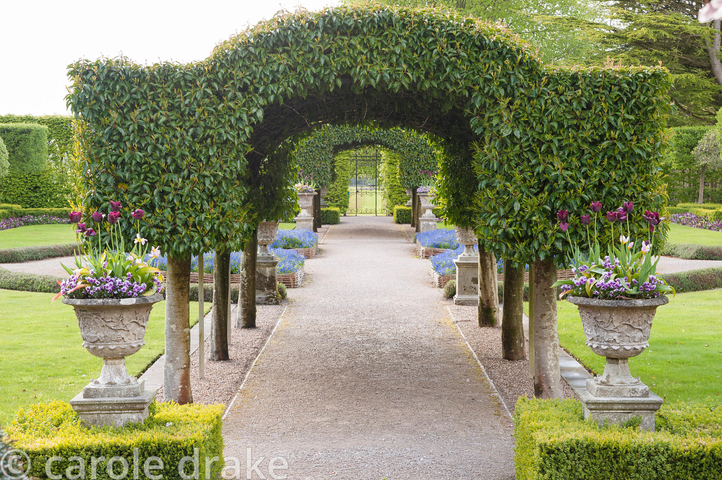 The Summer Garden with central archway of Portugese laurel framed with urns set into clipped box hedges. Holker Hall, Grange ...