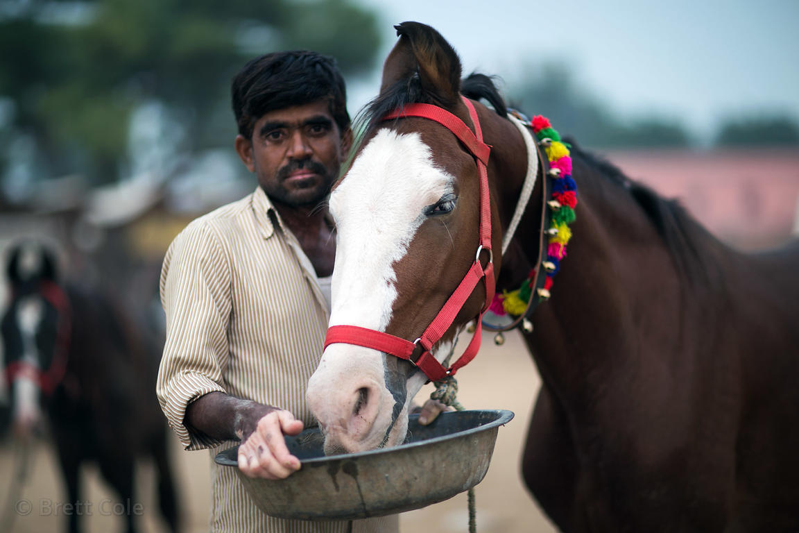 A man feeds his horse during the Pushkar Camel Fair, Pushkar, Rajasthan, India