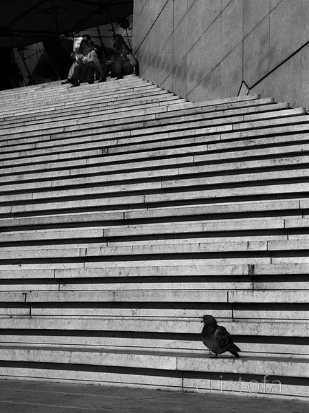 a pigeon on steps at the Grande Arche