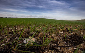 Greeen_Fields_LittleHampton_2015_075