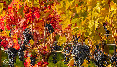 okanagan_fruits-138