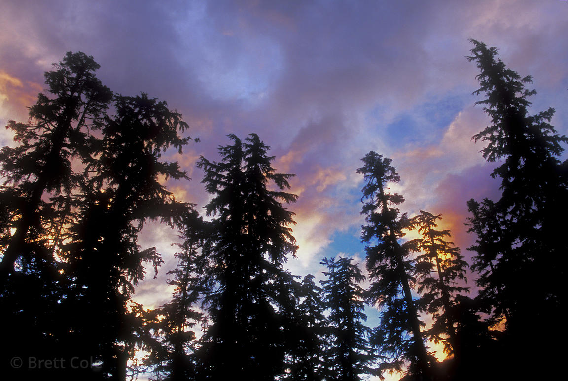 Ancient forests in the Elaho Valley stand silhouetted against a blue and orange sky at sunset. Lower mainland, British Columbia,