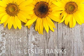 Sunflowers on Vintage Wood