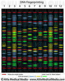 Medical Genetics Images & Videos