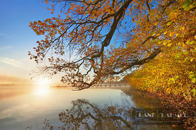 Oak in autumn colours at lake (lat. quercus) - Europe, Germany, Bavaria, Upper Bavaria, Starnberg, Schlagenhofen (Fünfseenlan...