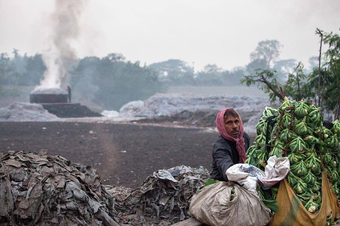 A man loads cauliflower onto a cart near Bantala in the East Kolkata Wetlands, Kolkata, India. In the background is an incine...