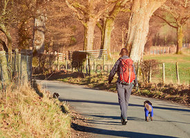 A hiker and their dog walking along a country lane in the warm morning sunlight in the English Lake District.