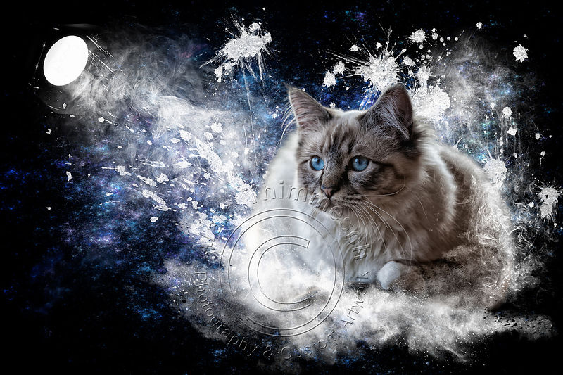 Art-Digital-Alain-Thimmesch-Chat-1