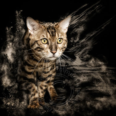 Art-Digital-Alain-Thimmesch-Chat-16