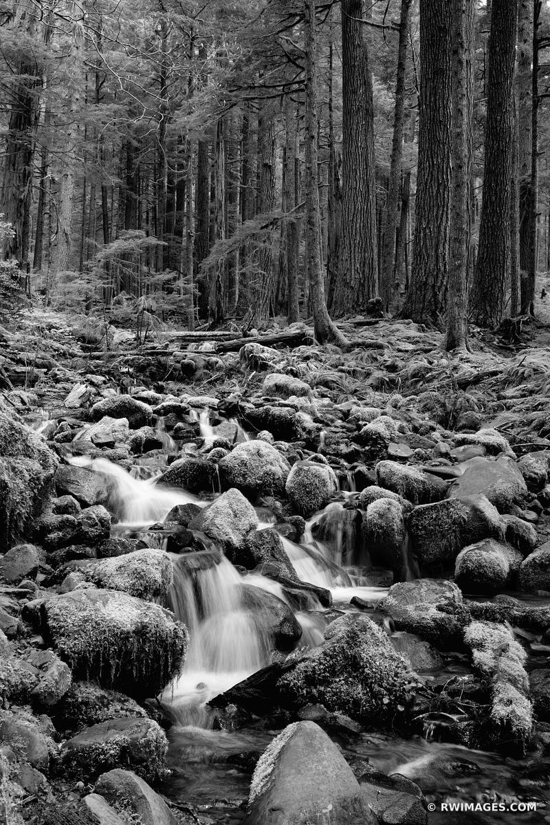 MOSSY ROCKS FOREST STREAM SOL DUC FALLS TRAIL OLYMPIC NATIONAL PARK WASHINGTON PACIFIC NORTHWEST FOREST BLACK AND WHITE VERTICAL