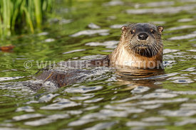 River Otter Bath 1