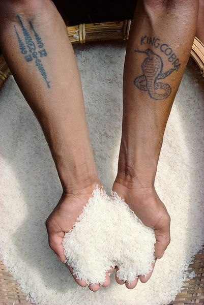 Hands holding rice