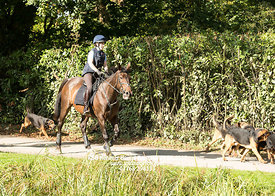 2017-09-24 KSB Kennels Hound Exercise