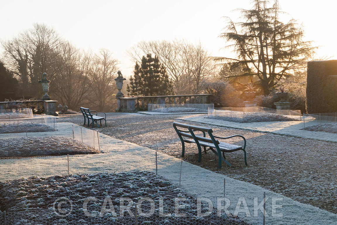 The terrace garden in the winter with beds protected by chicken wire from marauding deer and rabbits. Kingston Maurward Garde...