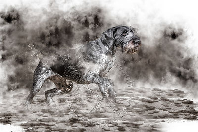 Art-Digital-Alain-Thimmesch-Chien-715