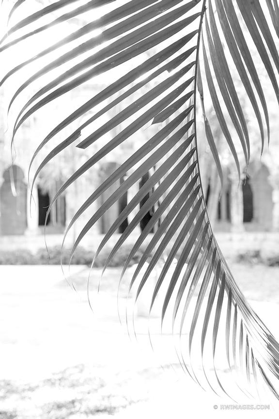 PALMETTO LEAF AND SAINT BERNARD DE CLAIRVAUX CHURCH NORTH MIAMI BLACK AND WHITE