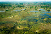 Aerial view over the Okavango Delta, Botswana