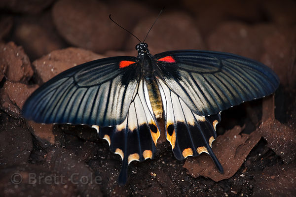 Butterfly (sp.), World of Birds, South Africa