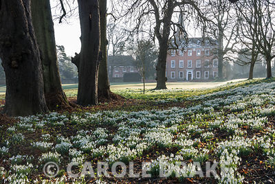 The pleasingly symmetrical facade of Welford's Queen Anne house, dating from 1702, seen beyond carpets of snowdrops and aconi...