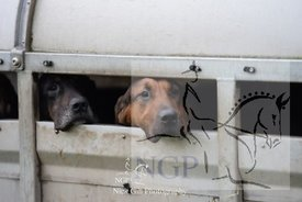 highmoor_n_bloodhounds_23_12_18_0007