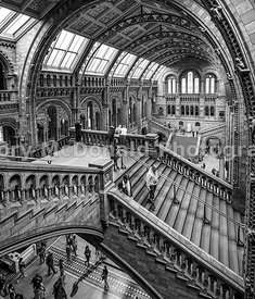 Inside the Natural History Museum