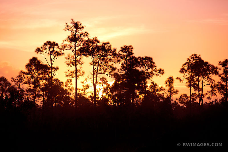 PINELANDS AT DAWN EVERGLADES NATIONAL PARK FLORIDA