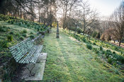 A grassy terrace with lichen encrusted benches and a stone obelisk runs between slopes dotted with thousands of daffodils. Ol...