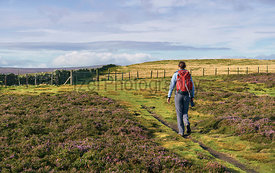 A hiker walking their dog in the English countryside.