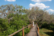 Treetop walk, Mapungubwe National Park, South Africa