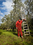 olive_picker_portrait_III