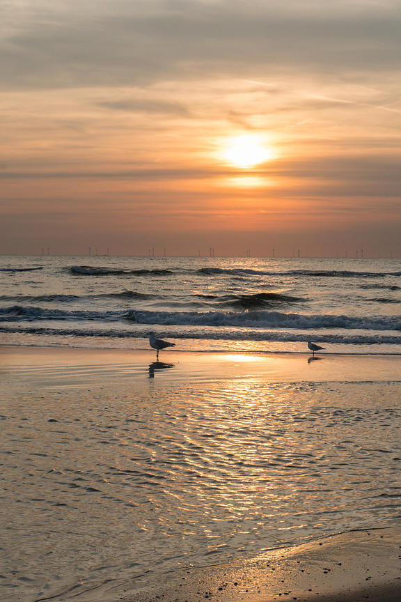 Sea gulls at the beach at sunset