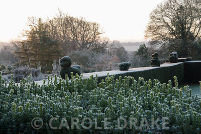 Frosty topiary animals on top of the yew hedge surrounding the croquet lawn. Kingston Maurward Gardens, Dorchester. Dorset, UK