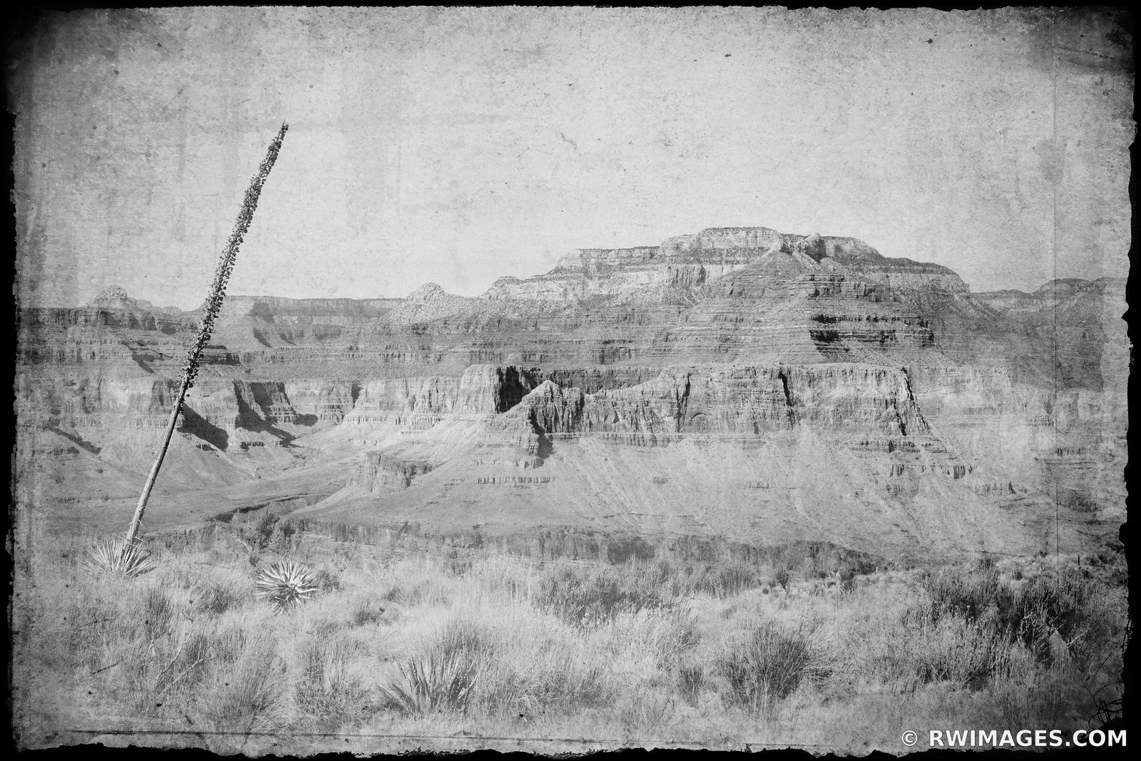 SOUTH KAIBAB TRAIL GRAND CANYON ARIZONA OLD HISTORIC VINTAGE BLACK AND WHITE