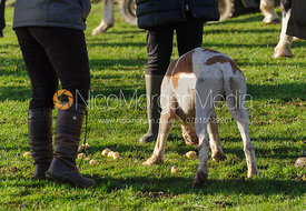A hound gets lucky with sausage rolls at the meet
