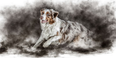 Art-Digital-Alain-Thimmesch-Chien-807