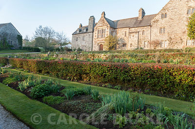 Dawn sunlight lights up the east front of the house, seen from the east terrace, over clipped hedge of ornamental quince, Cha...