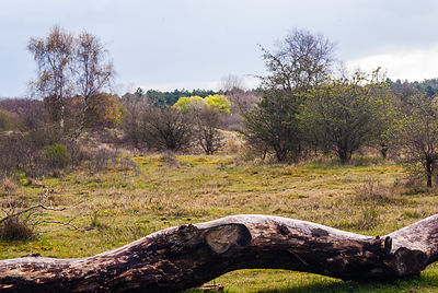 Tree trunk landscape in the dunes in spring time