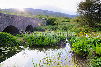 Bridge over the Caher River with pond in the foreground surrounded by moisture loving plants including Zantedeschia aethiopic...