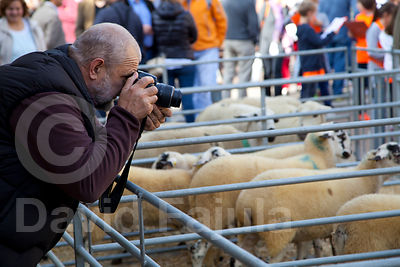 Man taking pictures of the sheeps. Catalan Sheep Fair (Fira Catalana de l'Ovella)
