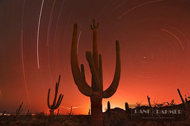 Saguaro (carnegiea gigantea) and stars - North America, USA, Arizona, Pima, Tucson, Tucson Mountain Country Park - digital